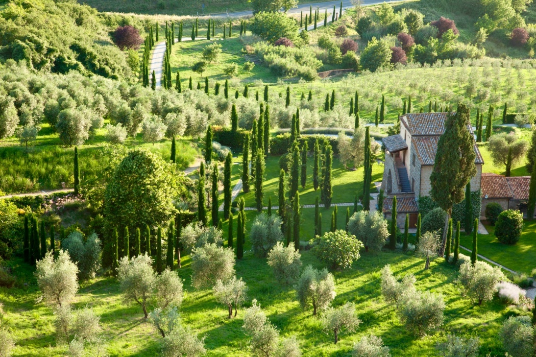 Olive groves and Italian Cyprus trees are seen at sunset in the Medieval Umbrian town of Orvieto. Italy.