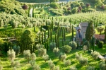 Olive groves and Italian Cyprus trees are seen at sunset in the Medieval Umbrian town of Orvieto.Italy.