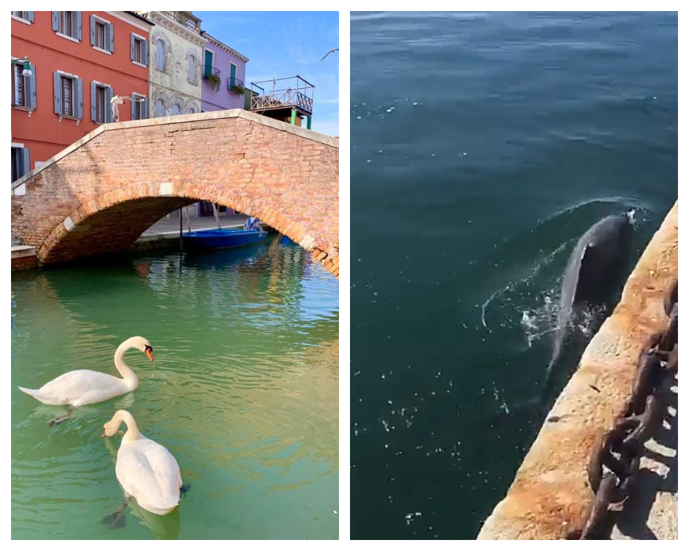 Swans Dolphins in Venice